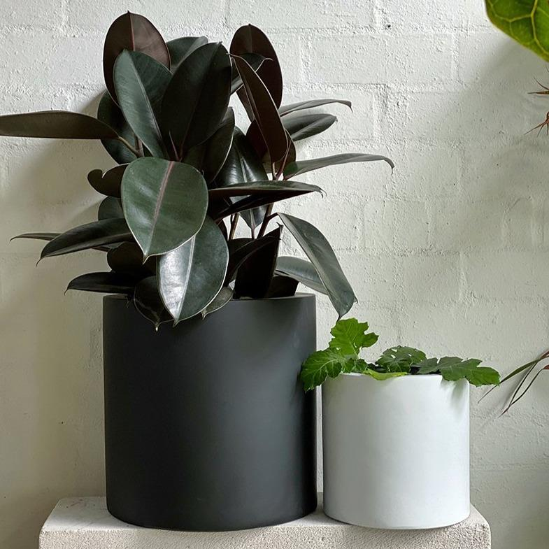 Tub Planter - THE PLANT SOCIETY ONLINE OUTPOST