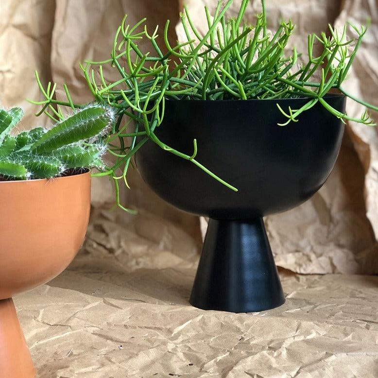 Large Vera Planter in Black with Rhipsalis by Lightly Design