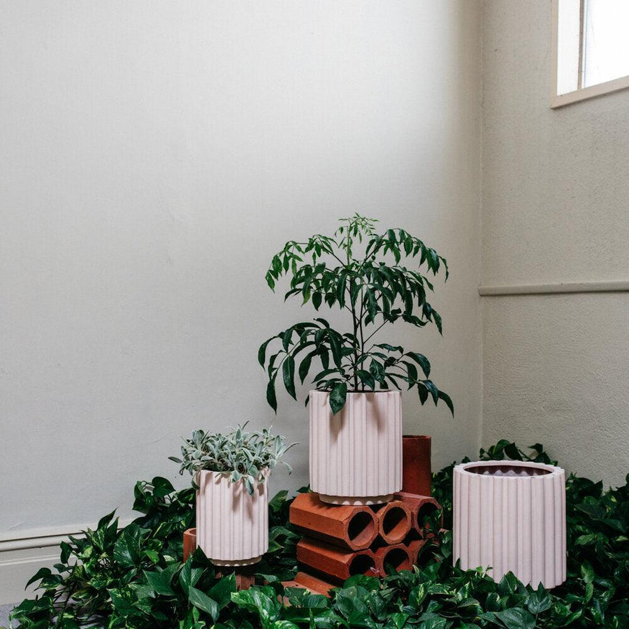 Small Flute Planter by The Plant Society x Capra Designs- Totem Collection -