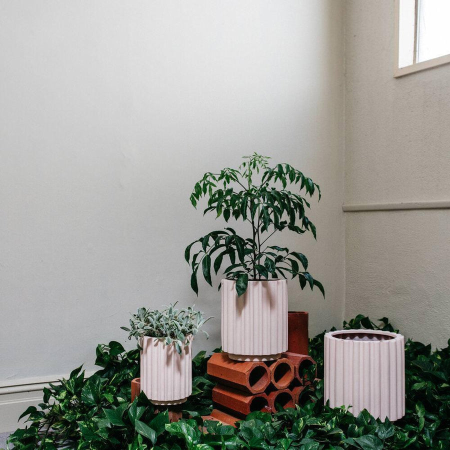 Large Flute Planter by The Plant Society x Capra Designs - Totem Collection -