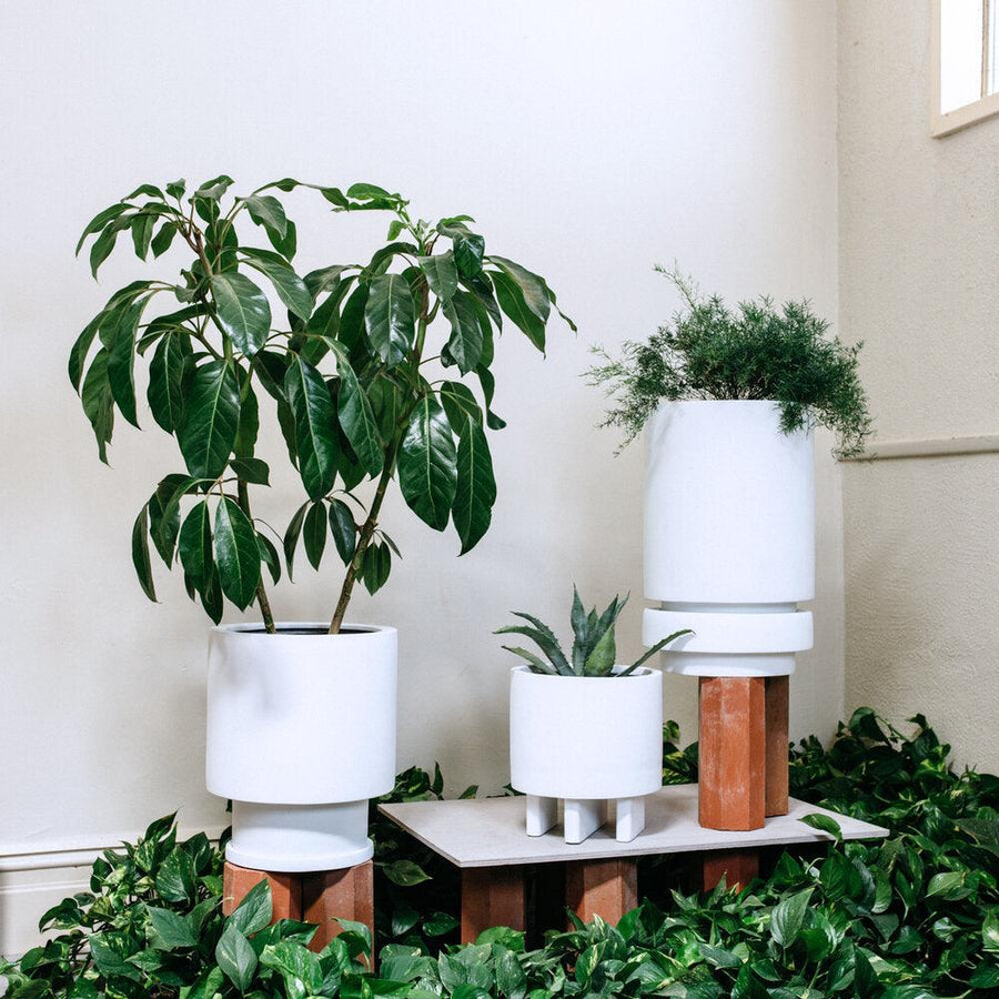 totem planters white by the plant society