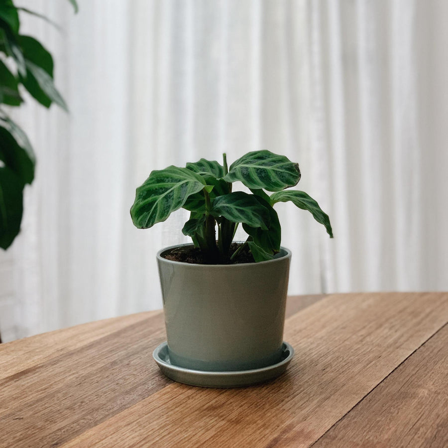 Botanical Family Pot in Dusty Green by HAY