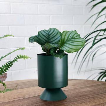 Small Palm Springs Planter by Lightly