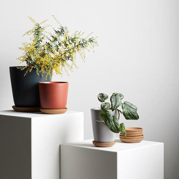 Bonnie Planter in Fog by Evergreen Collective