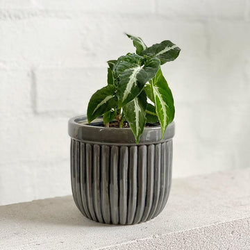 Grey Fluted Planter