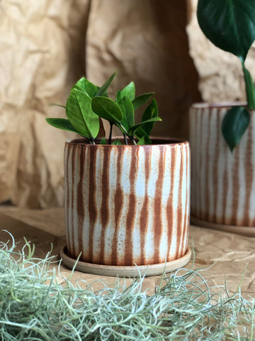 Fire Planter - Line - by Arcadia Scott - THE PLANT SOCIETY ONLINE OUTPOST
