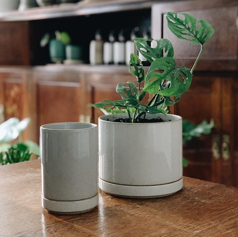 hasami planter small and medium in white graze in The Plant Society Paddington