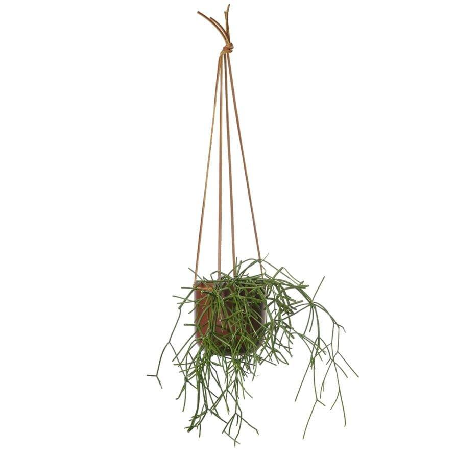 Hanging Planter Ochre by Lightly Design