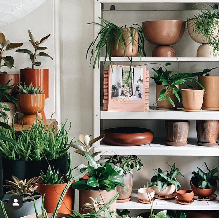 Lightly Design in our Paddington Outpost. Indoor Plants, Handmade Ceramic and House Plants in Paddington Sydney.