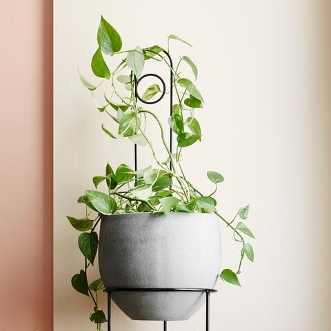 Loop Plant Stake by Ivy Muse