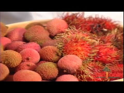 Rambutans vs. Lychees, The Delicious and Uncommon Fruits