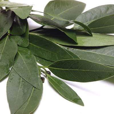 Image of  Bay Leaf Other