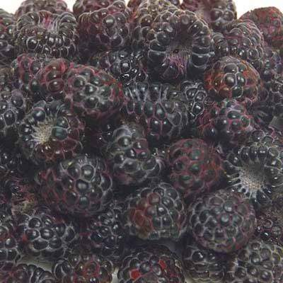 Image of  Black Raspberries Fruit