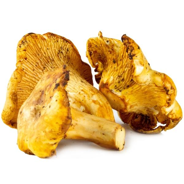 Image of  Chanterelle Mushrooms Vegetables