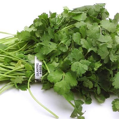 Image of  Cilantro Other