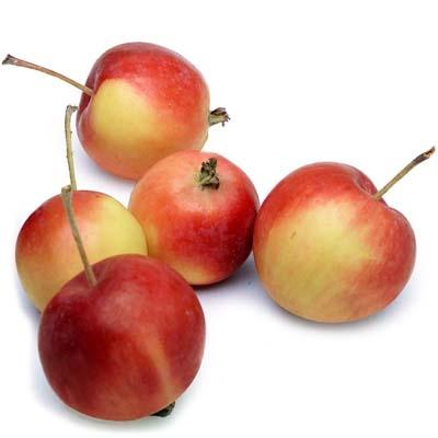 Image of  Crab Apples Fruit