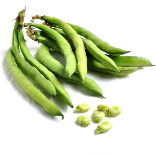 Image of  Fava Beans Vegetables