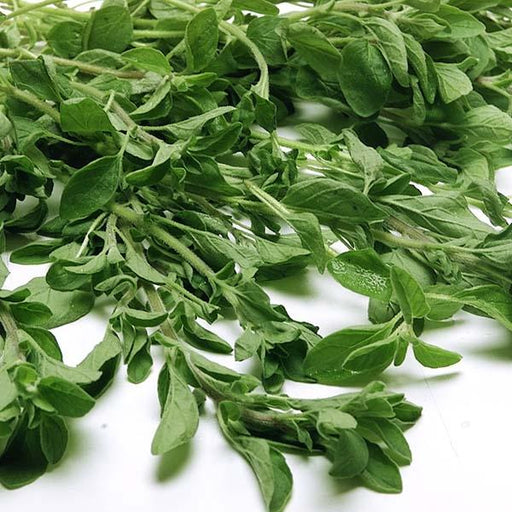 Image of  Oregano Other