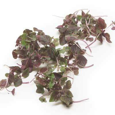 Image of  Red Perilla Leaves (Shiso) Other