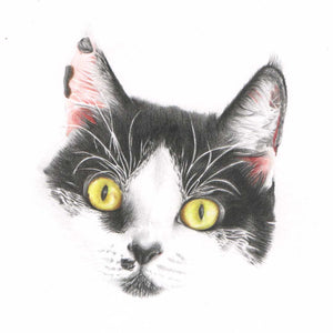 Custom portrait of a black and white cat face only.