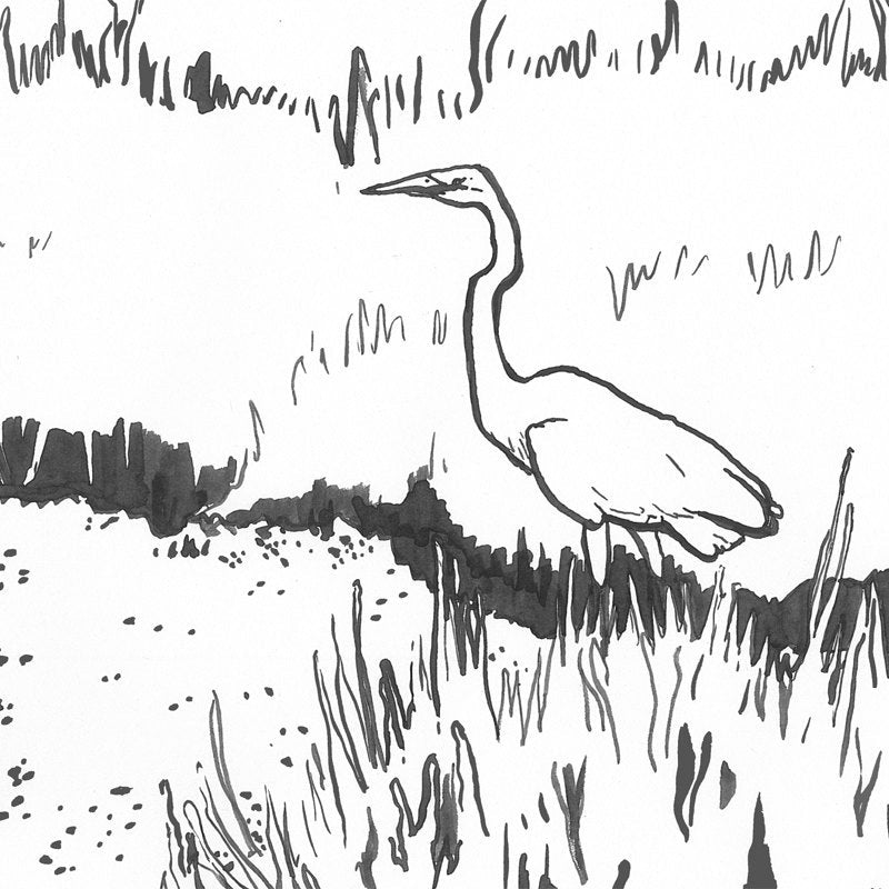 """The Sapelo Island Coloring Book"" by Abigail West"