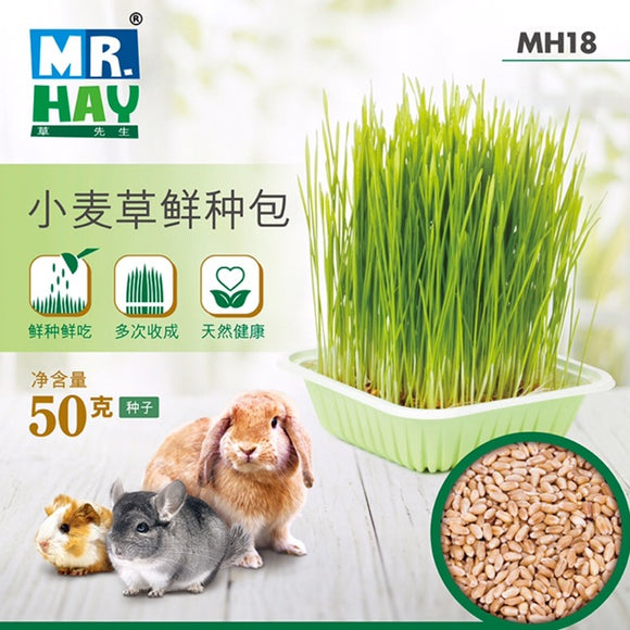 Mr Hay Wheatgrass Planting Pack (50g)