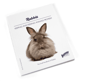 Bunny Nature Book Rabbit