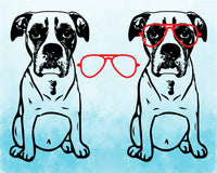 Boxer whit Aviator Glasses SVG Silhouette Cutting Files ClipArt Head Dog July Bulldog puppy paw merica patriotic 1774S