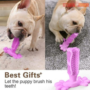Pawsitive+ Dog Dental Brush (50% OFF) - Pawsitive Products