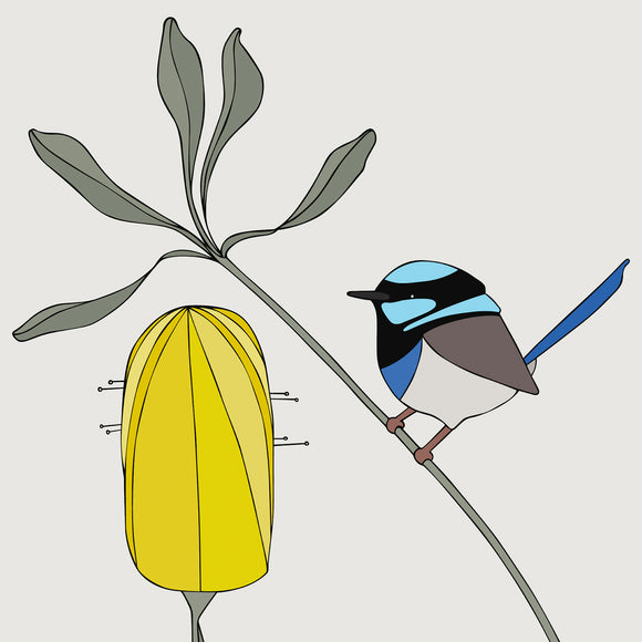 Art print - Superb Fairy-wren and Banksia
