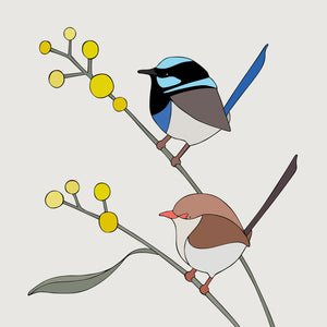 Art print - Superb Fairy-wrens and Wattle