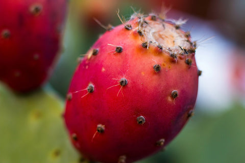 5 properties of prickly pear seed oil for the skin