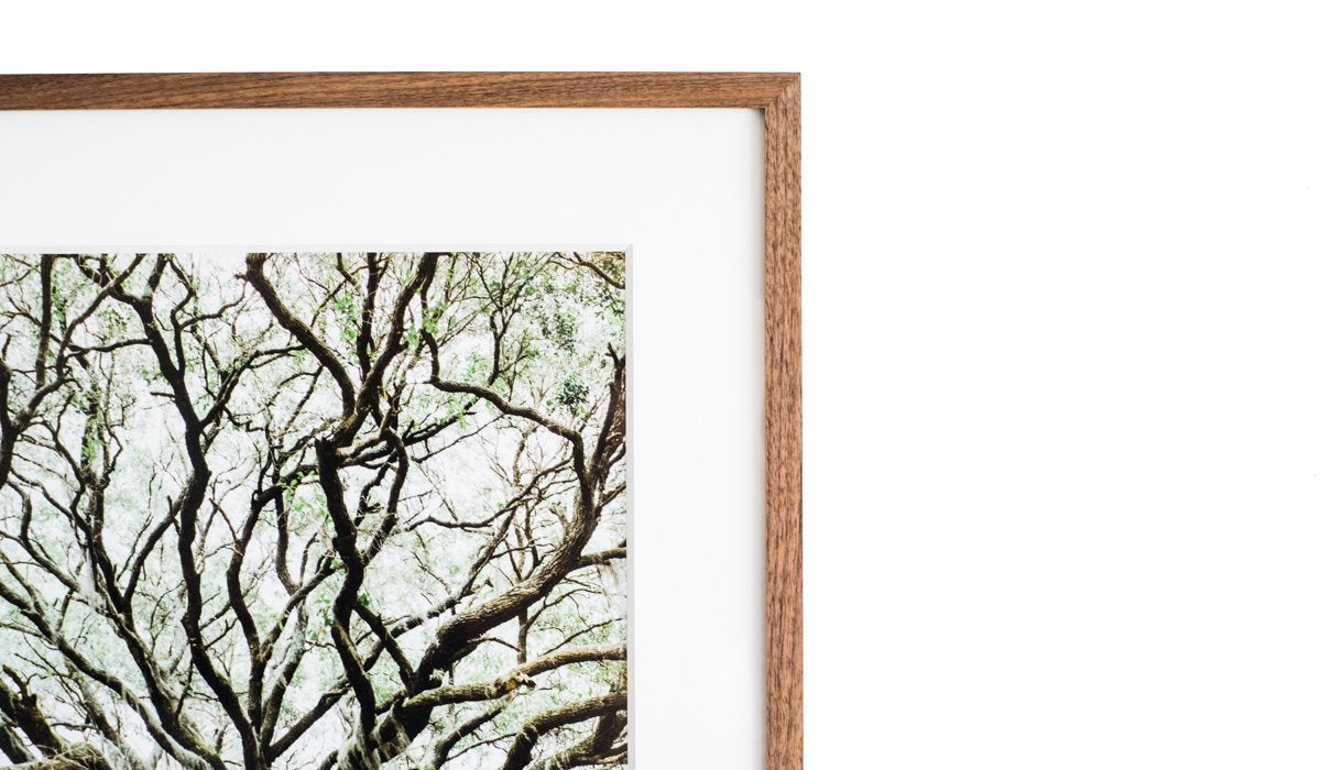 Fine frames for your finest photographs buy a frame plant a tree jeuxipadfo Choice Image
