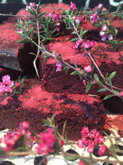 Beetroot, Davidson Plum and Chocolate Fudge Brownies