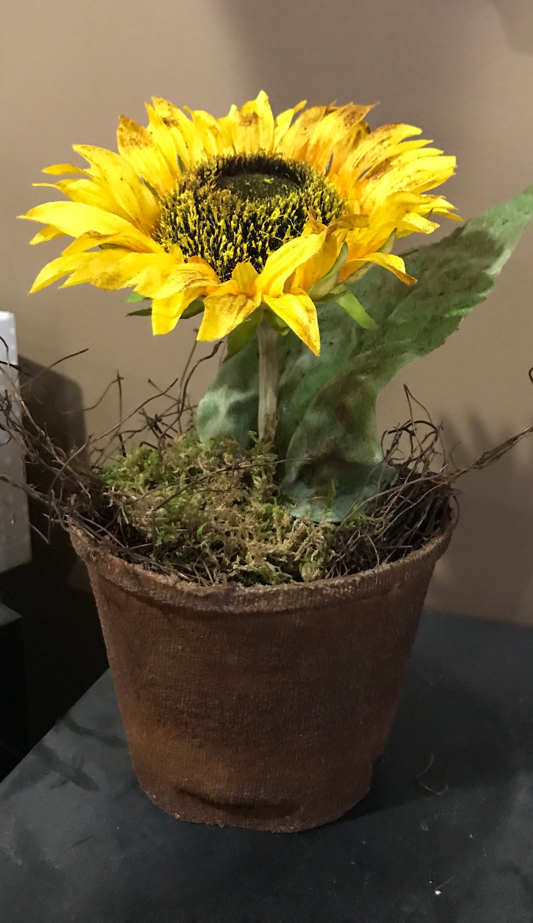 Grubby Potted Sunflower