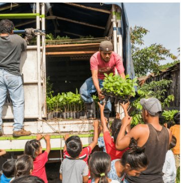 Man handing down saplings from a truck to a group of kids