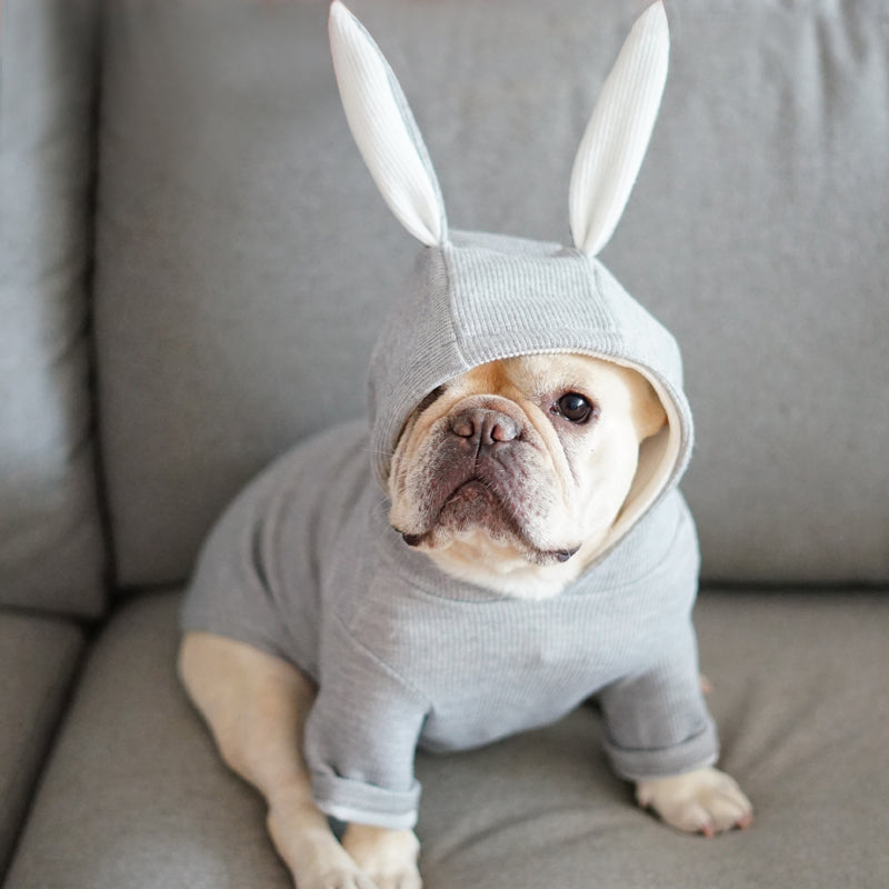 Cute French Bulldog Hooded
