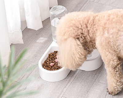 Puppy Food Dish Meal Pot