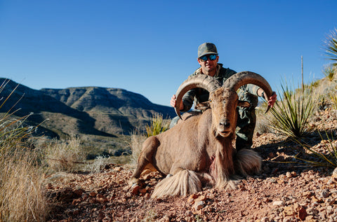 ryan with Aoudad