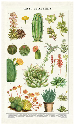 Tea Towel - Succulents