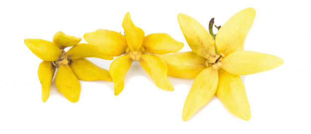 Ylang Ylang - Do you feel the heat?