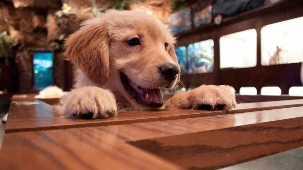 Finding Suppliers For Your Online Pet Store Business - Dropship USA