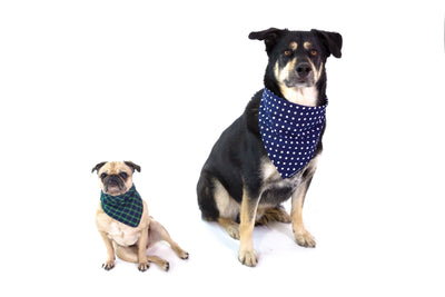Pet Supplies - Quizel Store