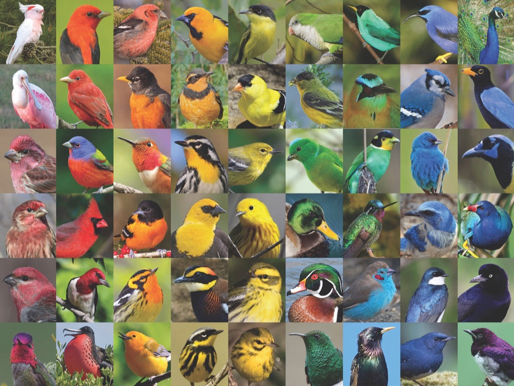 Rainbow of Birds