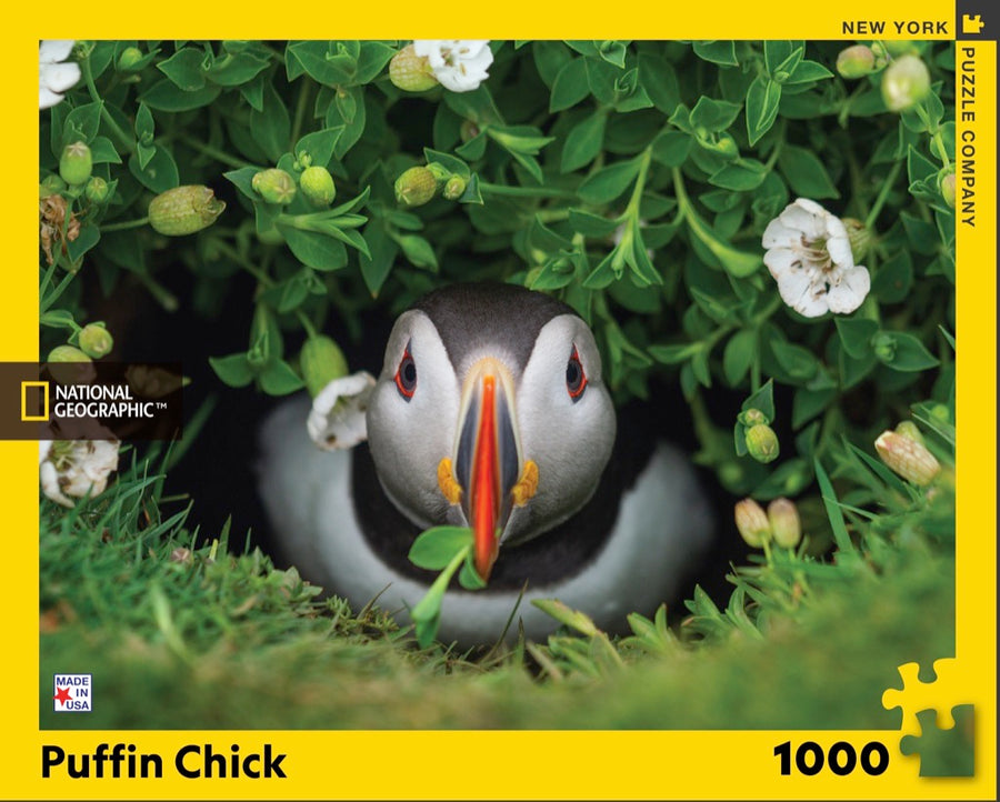 Puffin Chick