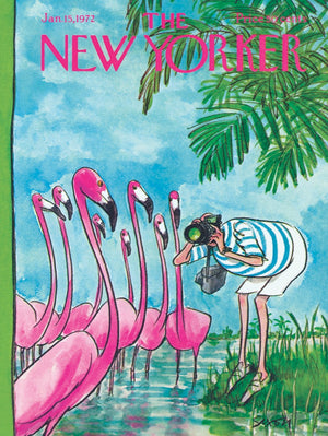 Flamingo Photographer