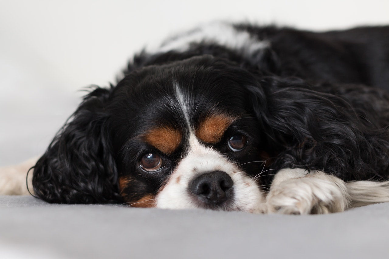 Common Causes of a Dog's Upset Stomach