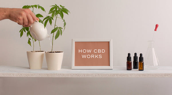 How CBD Works: Full Spectrum & Broad Spectrum CBD
