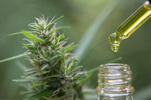 One Size Doesn't Fit All: The Complexities of Dosing CBD