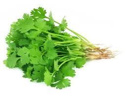 Cilantro (Coriander Leaves)